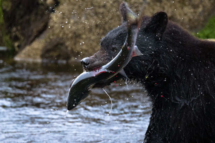 Close-up of dog drinking water