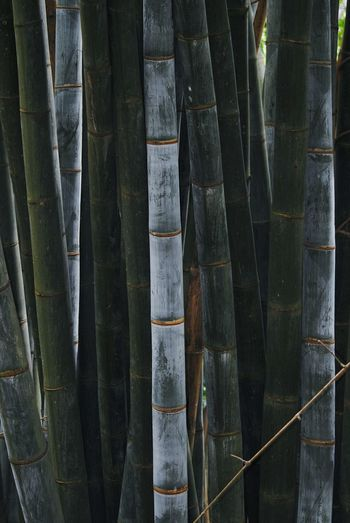 Full frame shot of bamboo hanging