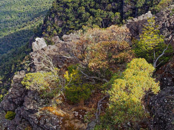Australian bush detail. Pinnacle Lookout. Grampians, Victoria. Grampian National Park Australian Bushland Scenics - Nature Landscape Mountain Rock Tree