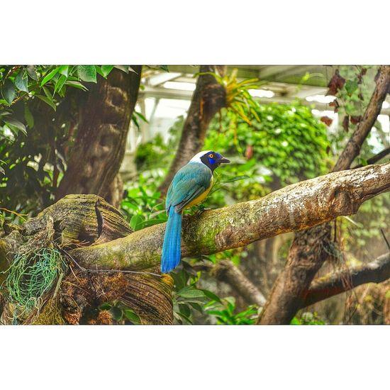 Colores De La Naturaleza Barcelona, Spain Cosmocaixa Amazonia