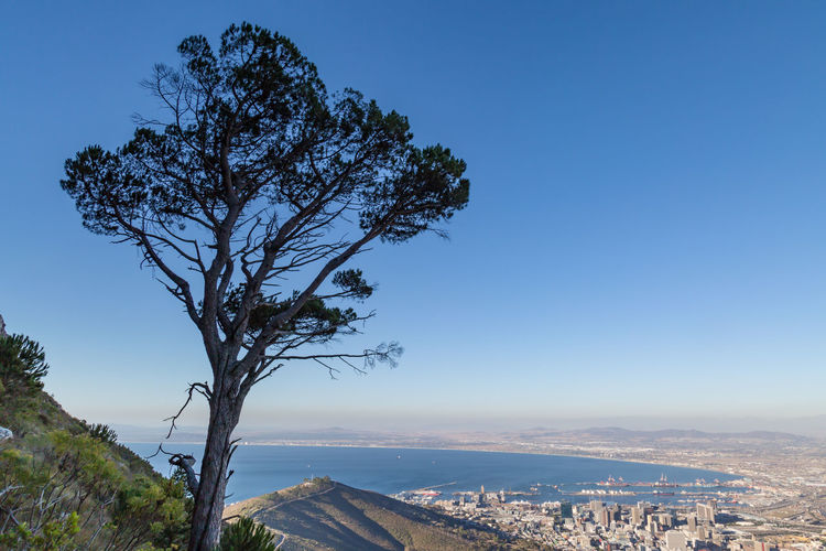 Tree By Cityscape Against Clear Blue Sky