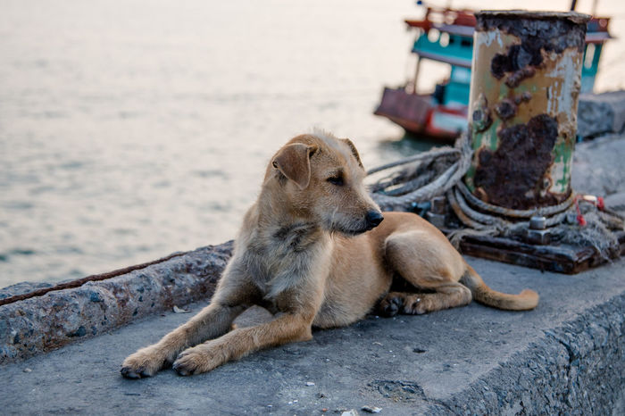Stray dog at jetty Animal Animal Themes Cute Day Dog Fur Jetty Lay Down Life Mammal Nature No People Outdoors Pet Portrait Portrait Of Dog Relaxing Rest Sea Stray Dog