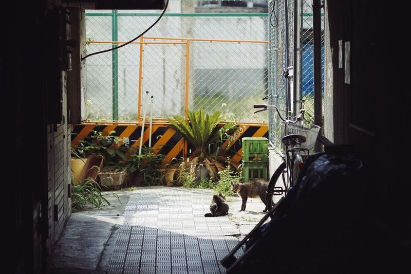 Cats playing in garage