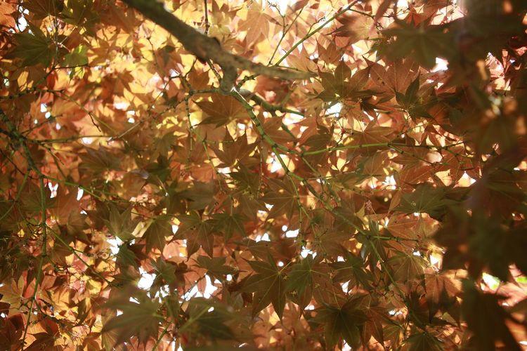 산을 담다   Brown Spring Leaf 🍂 Yellowbrown 바른생태살림원 태 Barunecos   be the Nature