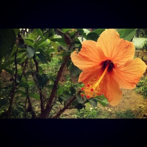 Naturebeauty Flowerloversofig Instapic Lovely beautiful photographylovers photographybyme followmefollowyou