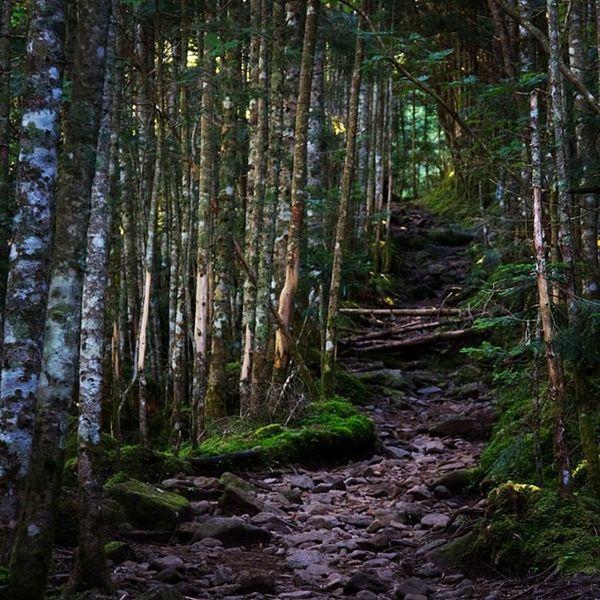 八ツの森 #山 #トレッキング #八ヶ岳 #森 #自然 #mountain #trekking #trees #yatsugatake #forest #nature #naturelovers #green #jpan #landscapes #snap Yatsugatake Jpan Nature Green Trees Snap Forest Trekking Landscapes Mountain Naturelovers 自然 トレッキング 森 山 八ヶ岳