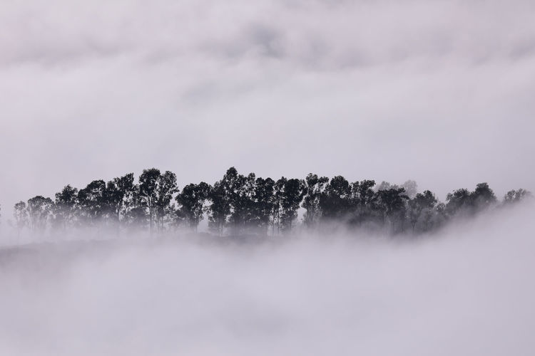 Fog Beauty In Nature No People Tranquility Scenics - Nature Tranquil Scene Tree Sky Plant Nature Cloud - Sky Environment Cold Temperature Day Idyllic Non-urban Scene Outdoors Copy Space Winter Hazy