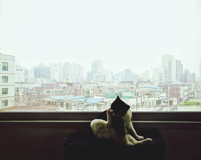 Man sitting by window in city