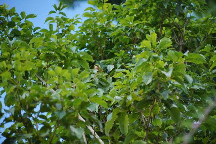 Low angle view of green leaves