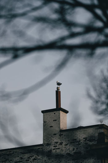 Bird sitting on chimney on brick building.