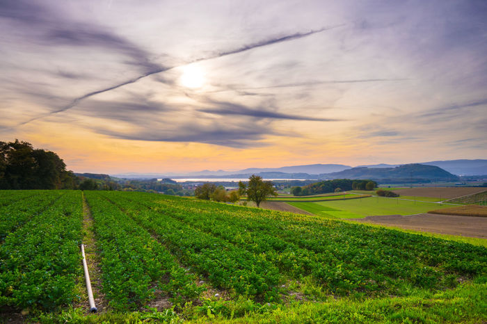 Abendhimmel Agriculture Beauty In Nature Crop  Cultivated Land Day Farm Field Freshness Green Color Growth Landscape Nature No People Outdoors Rural Scene Scenics Sky Tranquil Scene Tranquility Tree Lost In The Landscape Been There. Discover Berlin Done That. EyeEmNewHere
