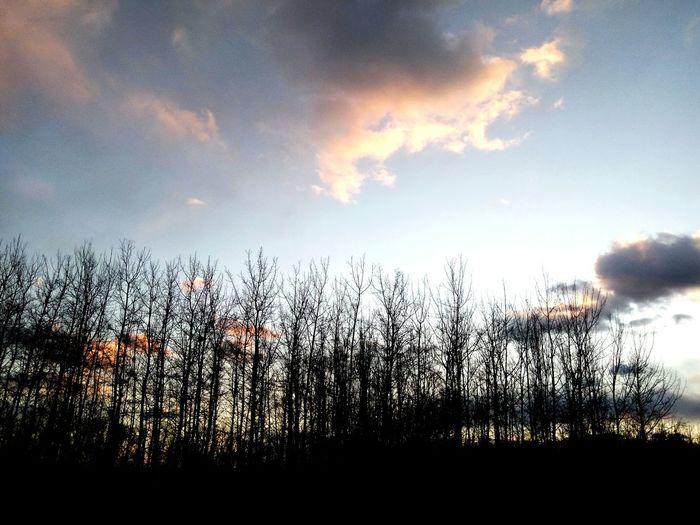 学校的小树林 偶尔也有静谧的一刻 First Eyeem Photo