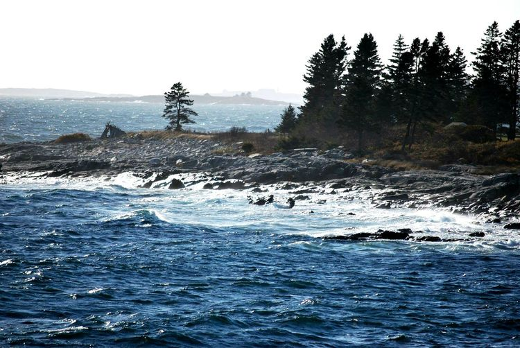 Pine Tree Water Tree Outdoors No People Nature Scenics Sea Beauty In Nature Sky Day Maine Serenity Sand Ocean View Tranquility Pemaquid Point, Maine