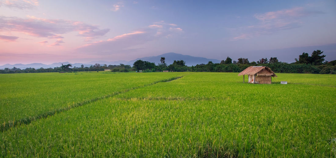 Rice fields in Thailand Buddha Buddhist Temple Thailand Landscape Field Plant Land Rural Scene Agriculture Environment Scenics - Nature Sky Grass Farm Beauty In Nature Architecture Nature Mountain Crop  Tranquil Scene Green Color Growth Tranquility No People Outdoors