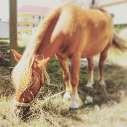 Horse Horse Riding 🐴