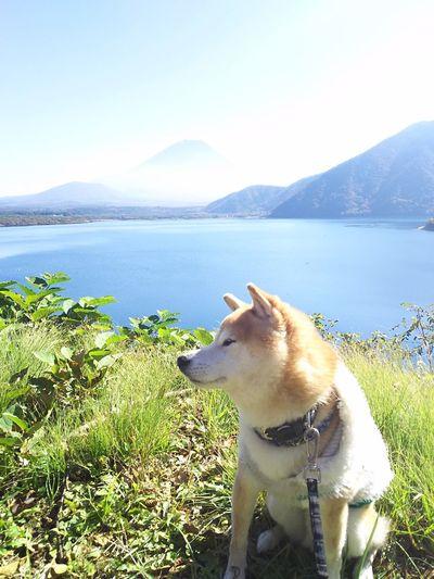 #富士山 #本栖湖 #柴犬 #豆柴 #日本犬 #犬 #ペット #湖 #山 #しばいぬ Water Pets Mountain Dog Lake Sitting Retriever Sky Animal Themes Grass