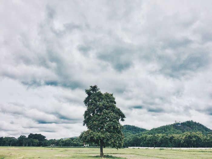 Scenic View Of Tree On Grassy Field Against Cloudy Sky
