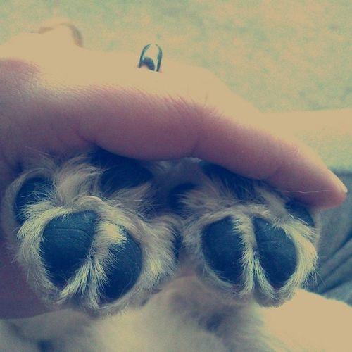 Dog life. Puppy Doglife Ilovemydog Dog dogoftheday pet
