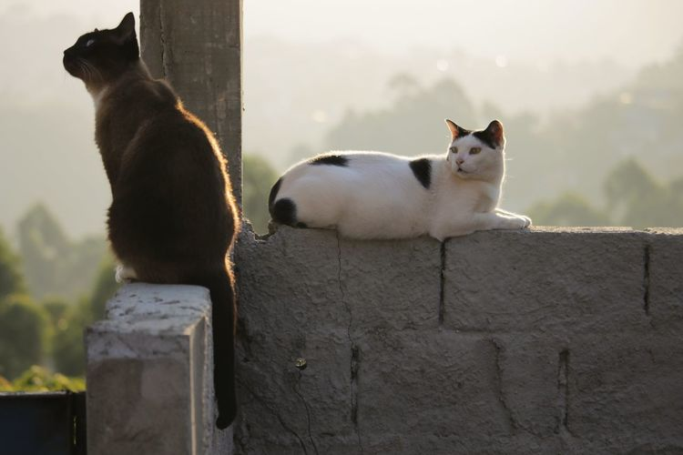 Two cats in a sunset