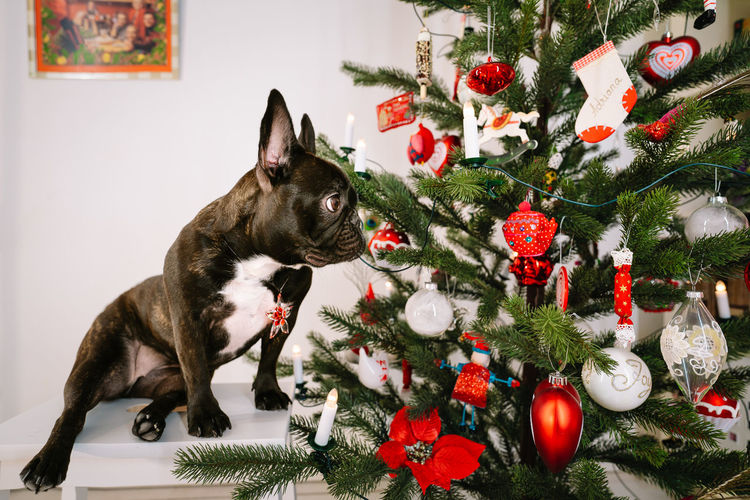 View of christmas decorations on tree