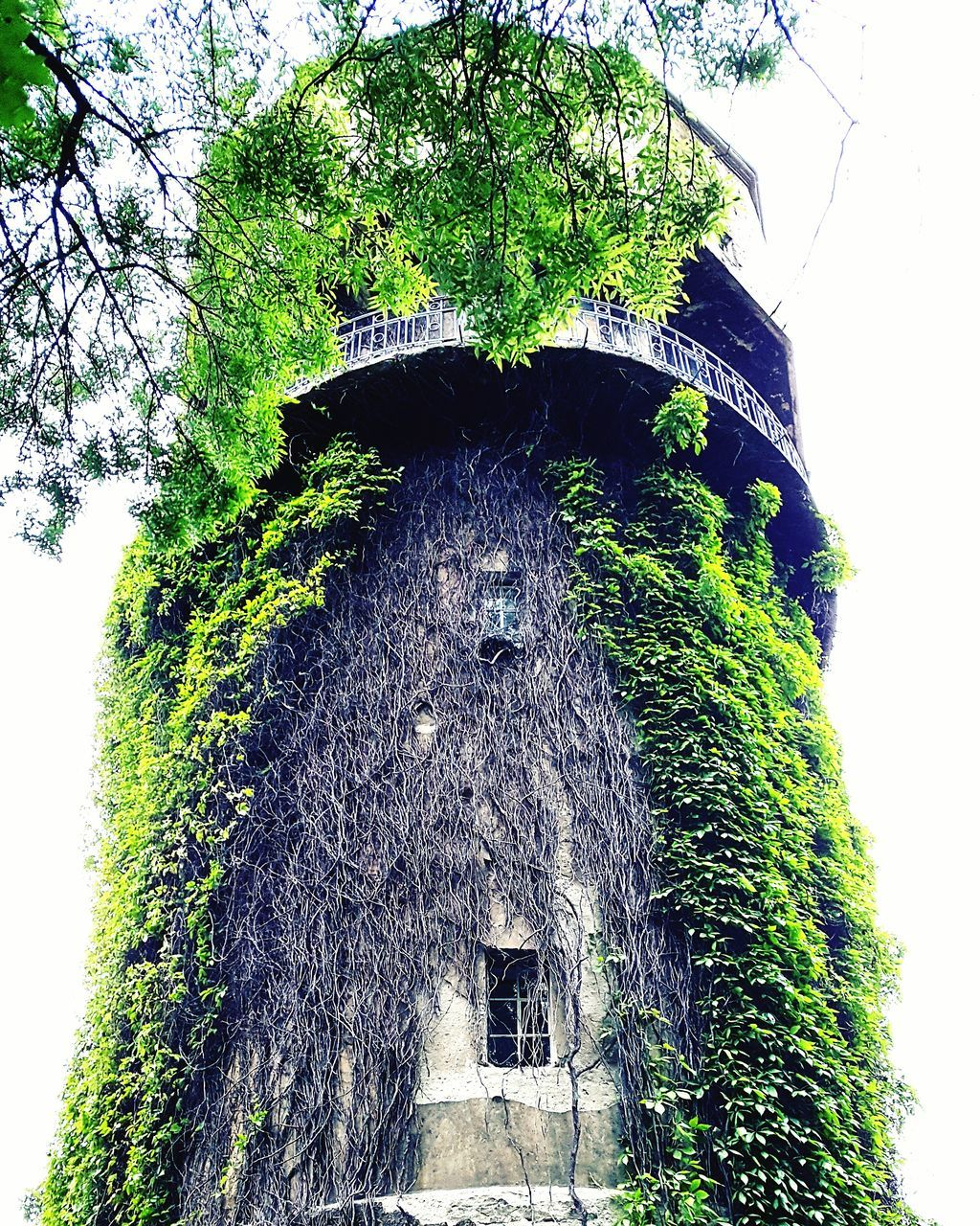 low angle view, tree, architecture, built structure, no people, day, outdoors, building exterior, growth, nature, green color, clear sky, ivy, tree trunk, sky, animal themes, beauty in nature, close-up