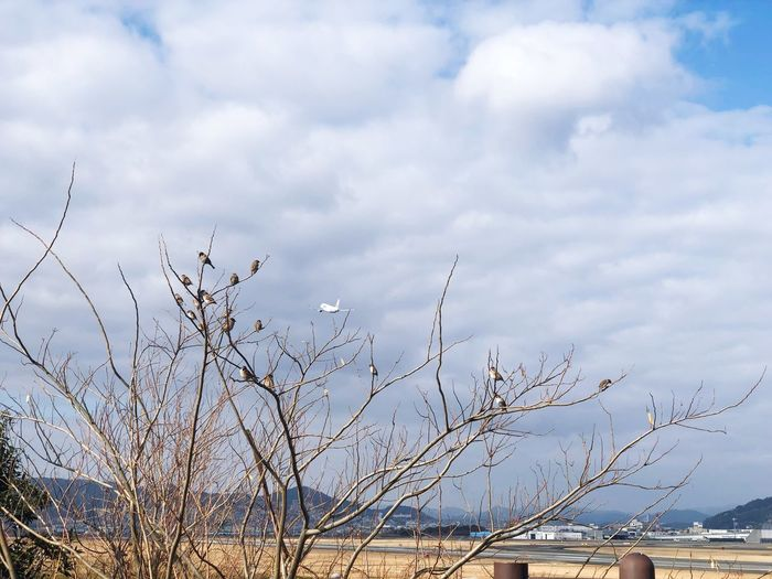 Cloud - Sky Sky Nature Beauty In Nature No People Day Animals In The Wild Plant Animal Wildlife Flying Flock Of Birds Large Group Of Animals Vertebrate Bird Low Angle View Tranquility Group Of Animals Animal Animal Themes Outdoors