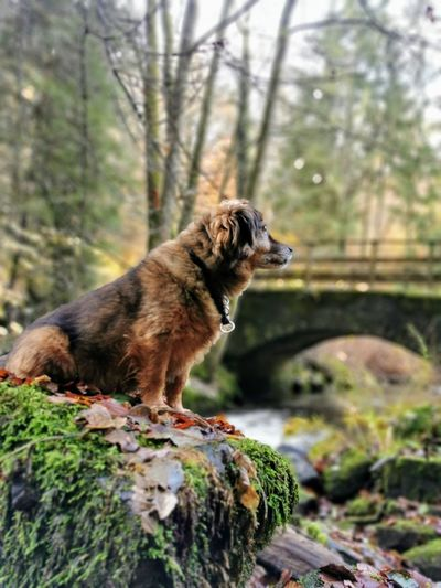 Tree Pets Dog