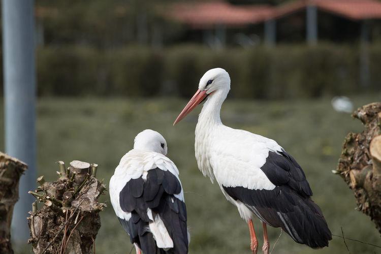 Close-up of storks