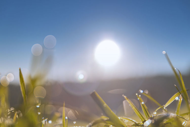Gras against the morning sun Copy Space Nature Photography Grass Green Grass Sunrise Summer Sun Summer Morning No People Germany Green Morning Sun Dew Dew Drops Bokeh Bokehlicious Bokeh Lights Clear Sky Summer Ethereal Sunlight Sun Sky Close-up Blade Of Grass Drop Droplet Plant Life
