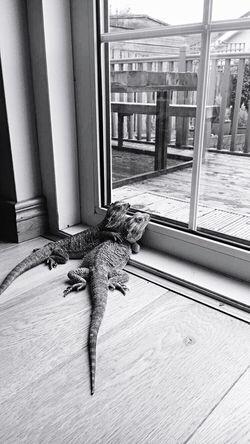 Love Love ♥ Friends Friendship Hug Animals Cute Blackandwhite Black & White Outside Sky Reptile Bearded Dragon