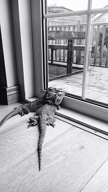 Love Love ♥ Friends Friendship Hug Animals Cute Blackandwhite Black & White Outside Sky Reptile Bearded Dragon