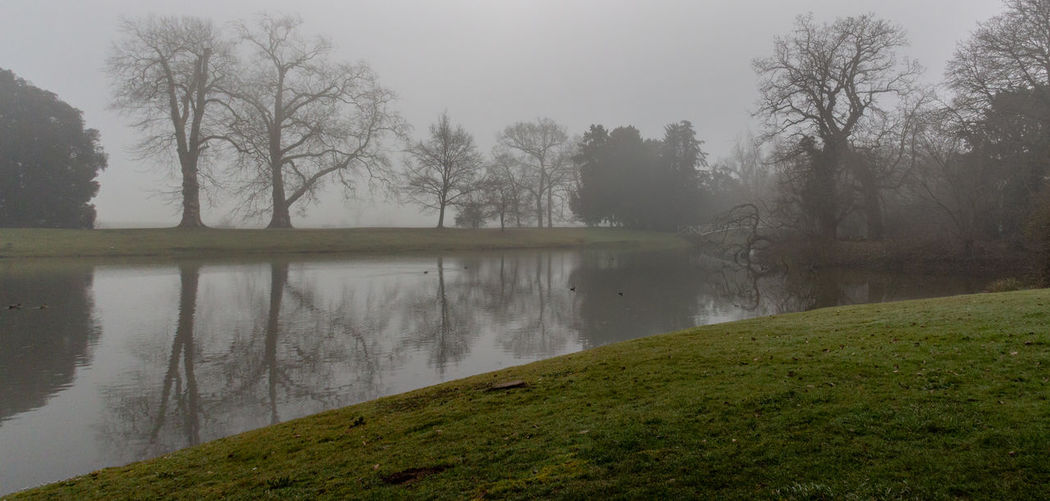 Beauty In Nature Tranquility Water Fog Outdoors Hazy  Day Lake No People Nature Tranquil Scene Ducks