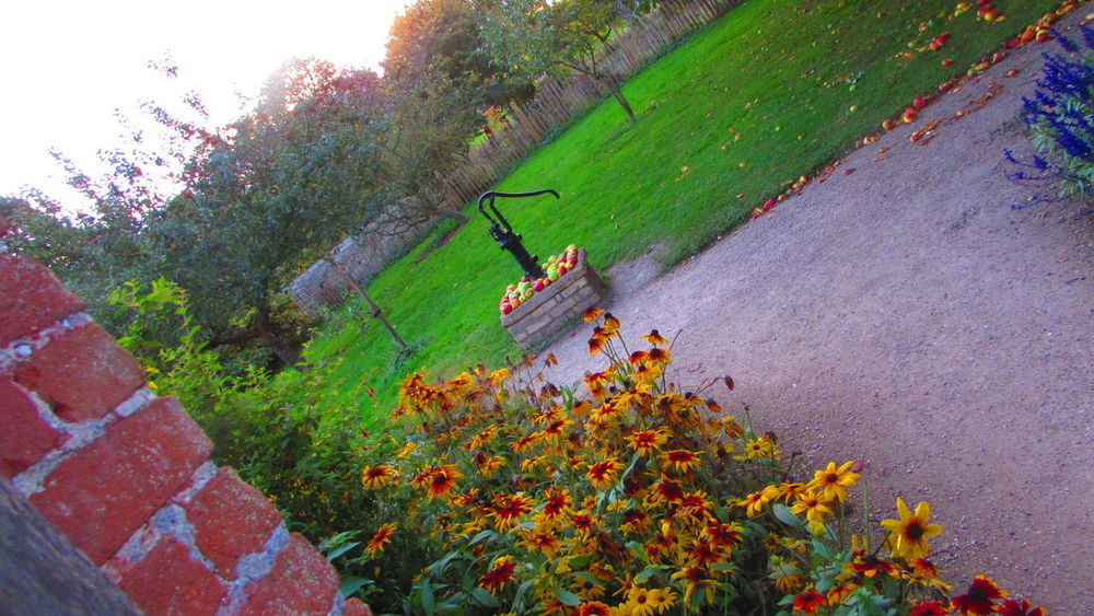 Growth Nature Outdoors High Angle View Plant Day Tree Apple Autumn October October2017🍂🍁💛 National Trust 🇬🇧 Wimpole Hall, Walled Garden Park - Man Made Space Rudbeckia Wimpole Estate