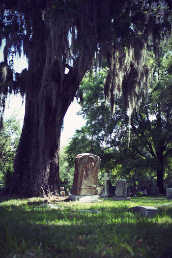 Cemetary Beauty Cemetery Cemetery Photography Memorial Memoriam Monuments Religion And Tradition Weathered Art Cemeteryscape Headstones Moss Mossy Tree No People Outdoors Peaceful Peaceful Place Religion Religious  Religious Architecture Tree Weathered Stone