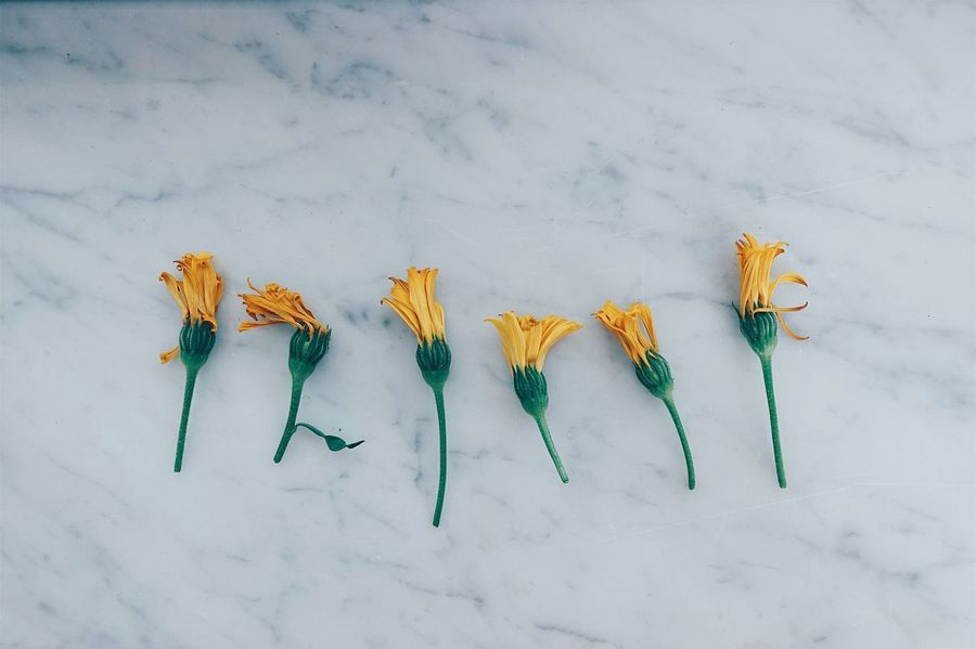 落落//。 High Angle View Flower Flowers Flower Head Close-up Minimalism Minimal Yellow Plant Season  Indoors  Day Nature Life Lifestyles Still Life Time Summer Colors No People Colorful BYOPaper! Live For The Story Paint The Town Yellow