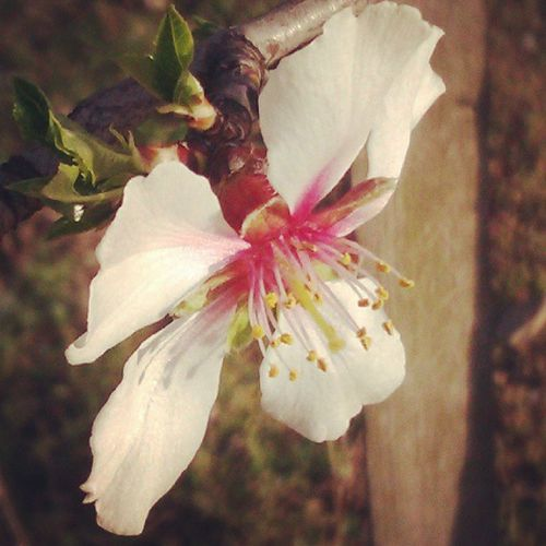 Endlich Kommt Der FR ÜHLING first blossom yeah @andi_304