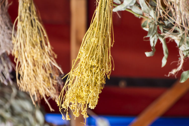 Close-up of food hanging outdoors