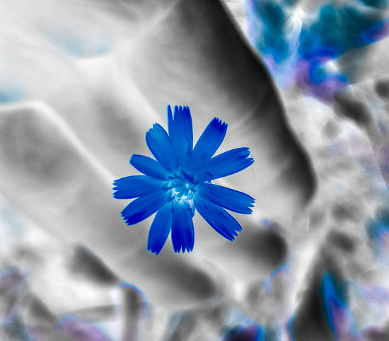 into negativity negative space Blue Grey Hand Light And Shadow Abstract Photography Flower Head Flower Multi Colored Blue Studio Shot Petal Vibrant Color Backgrounds Close-up Stamen Plant Life EyeEmNewHere Autumn Mood Capture Tomorrow