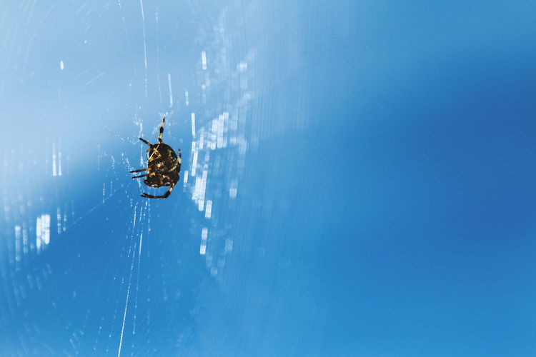 Close-up of spider on web against sky