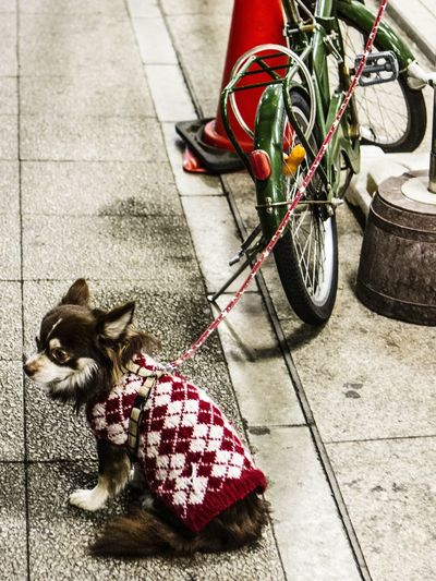 Yokohama Japan Street Photography EyeEm Place Of Heart Place Of Heart Live For The Story 犬 Dog Life Grey The Street Photographer - 2017 EyeEm Awards Pet Portraits The Week On EyeEm EyeEmNewHere