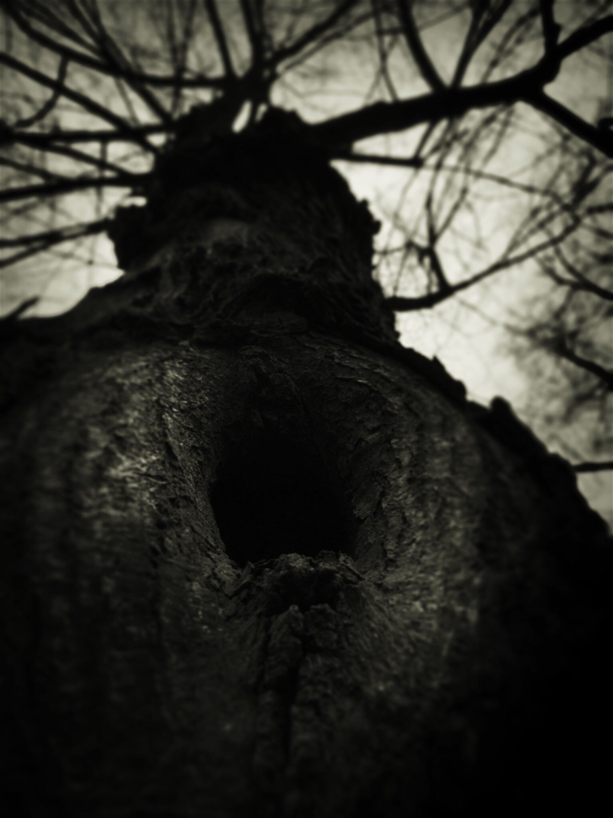 tree, close-up, low angle view, nature, textured, branch, tree trunk, no people, outdoors, focus on foreground, sky, day, tranquility, rough, selective focus, bark, growth, natural pattern, beauty in nature, part of