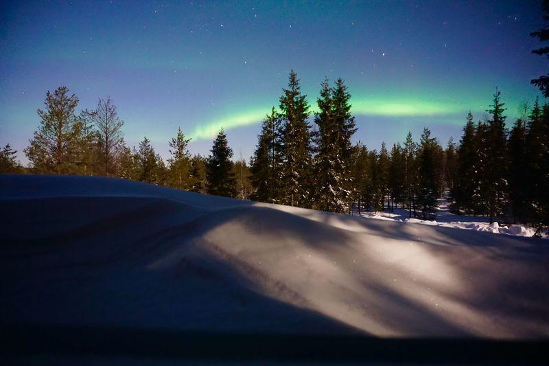 Aurora Snow Aurora Borealis Tree Plant Sky Night Scenics - Nature Winter Snow Cold Temperature Star - Space Pine Tree