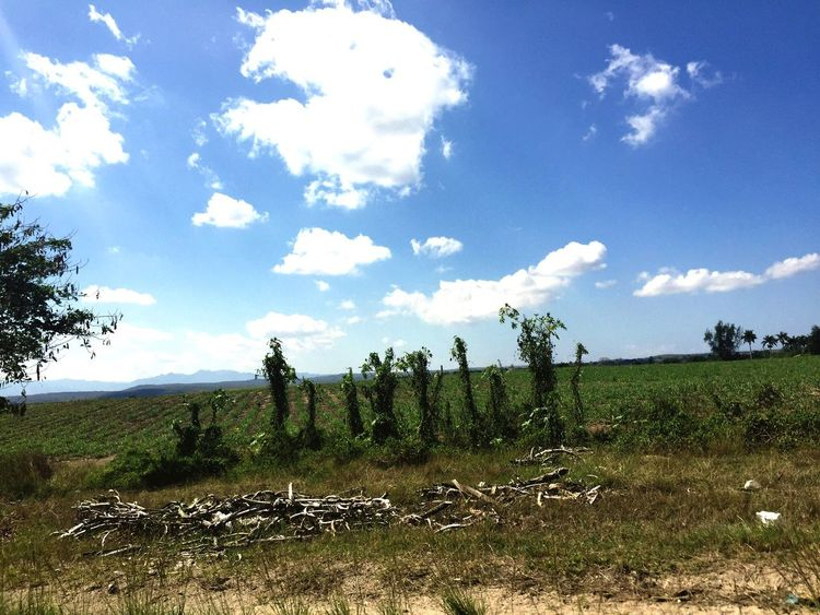 Cuban landscape Sky Cloud - Sky Field Outdoors Beauty In Nature Cuba