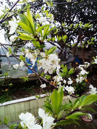 Just like flowers. Flower Day Green Color Plant Tree