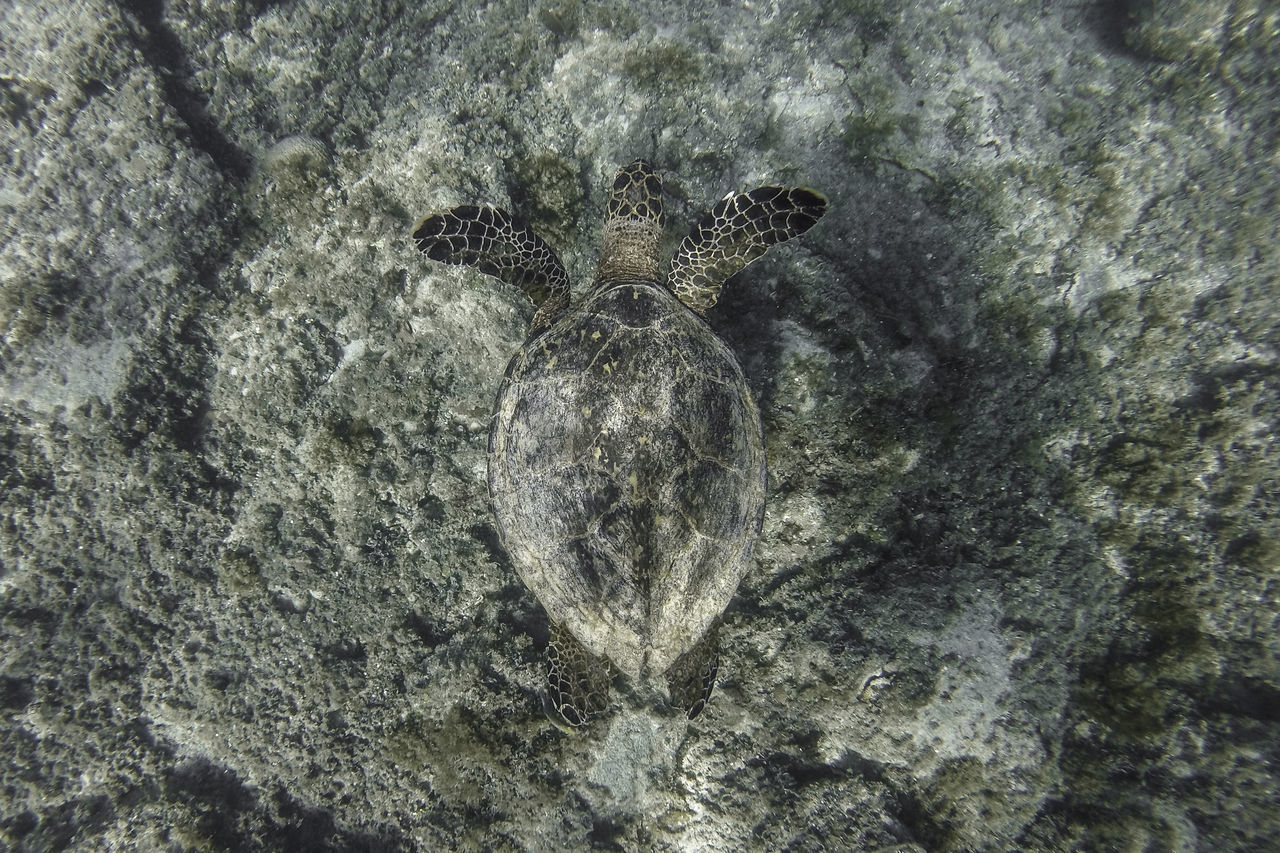 High angle view of turtle on rock undersea