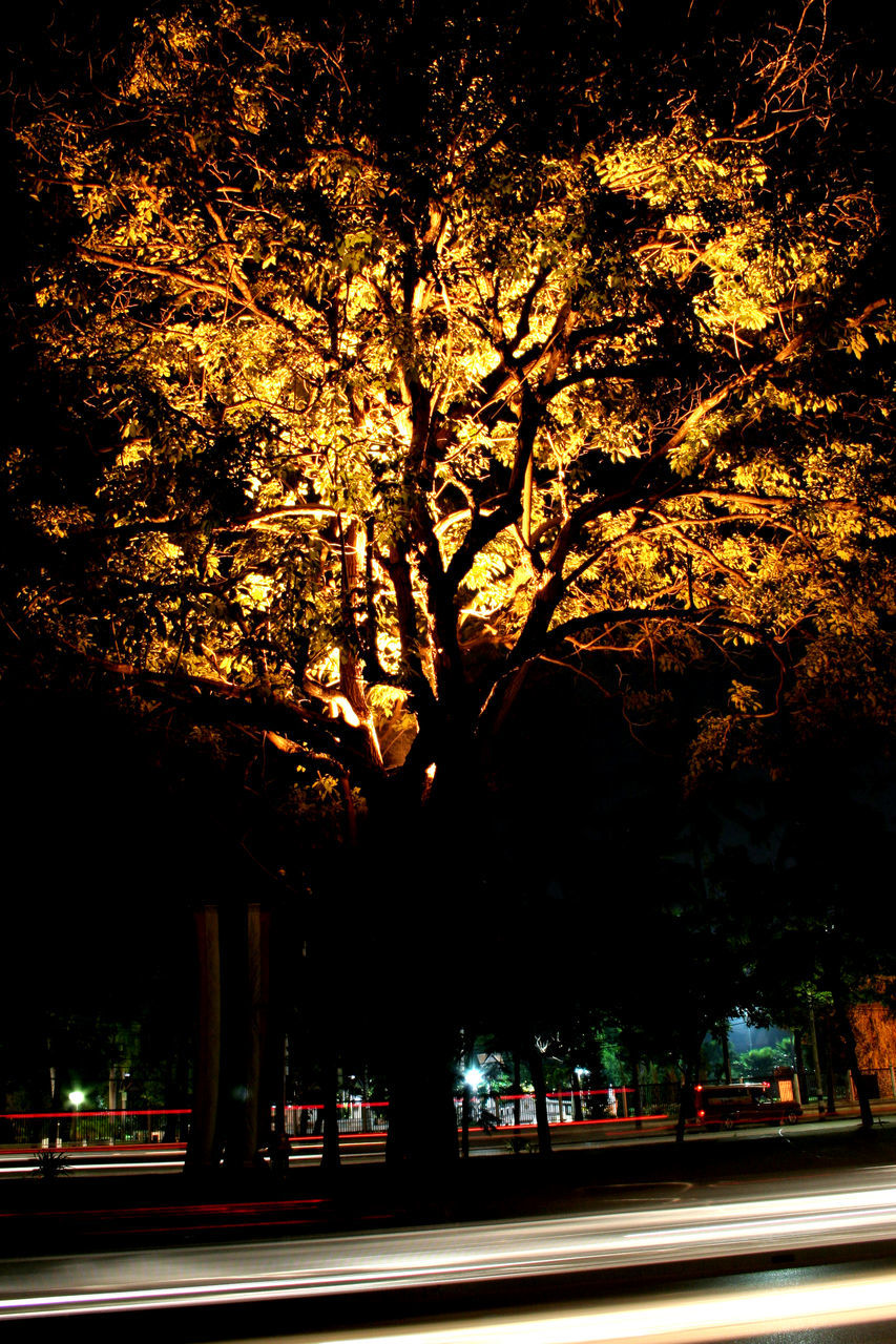 tree, road, transportation, outdoors, no people, sunlight, growth, city, nature, illuminated, beauty in nature