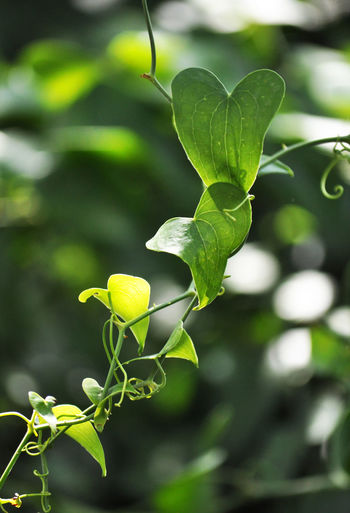 Close-up of green plant growing outdoors