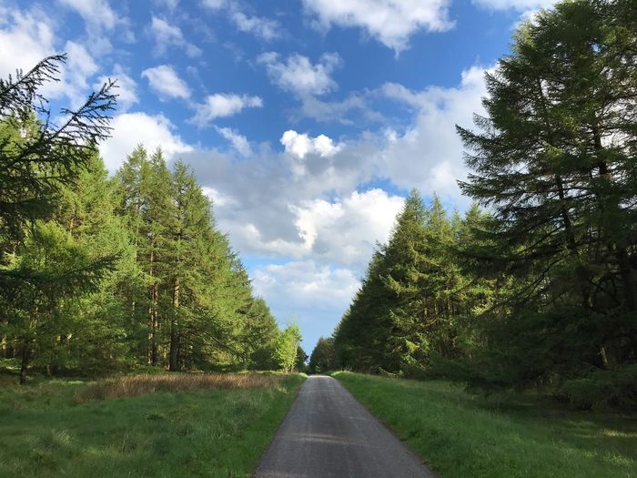 Country Lane Plant Tree Sky The Way Forward Direction Cloud - Sky Diminishing Perspective Road Nature Transportation Green Color No People Growth Day vanishing point Beauty In Nature Tranquility Sunlight Outdoors Empty Road