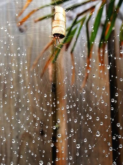 Spider Spider Webs Water Droplets Close-up Nature Outdoors Wet Leaf Spi Water Drop Focus On Foreground