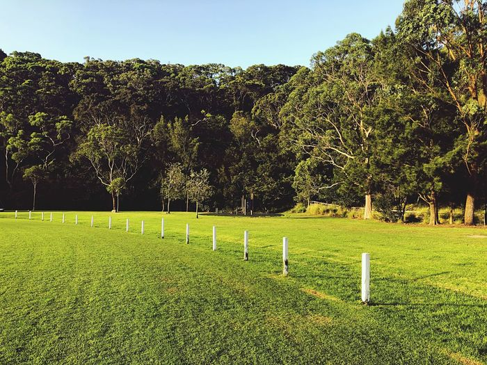 Sports oval Mown Mown Grass Fence Posts Fence Open Space Cricket Field Sports Field Mown Grass Leading Lines Posts White Posts Sports Venue Sports Oval Plant Tree Green Color Grass Field Growth Nature Beauty In Nature No People Outdoors Sport Landscape Tranquility